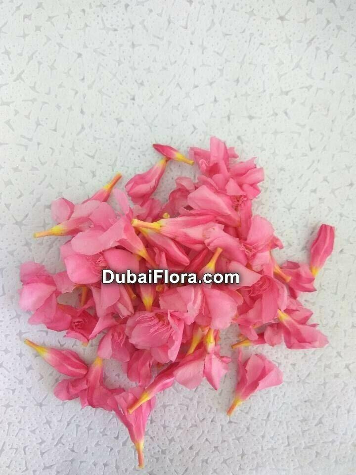 Pink Oleander Flowers (Arali)