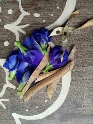 Butterfly Pea SEEDS (Clitoria ternateas)