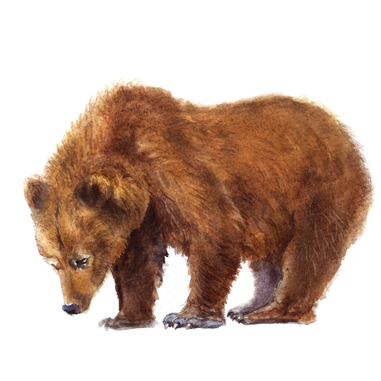 """Акварельная картина """"Медведь"""""""