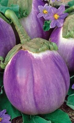 Баклажан Виолетта ди фиренце