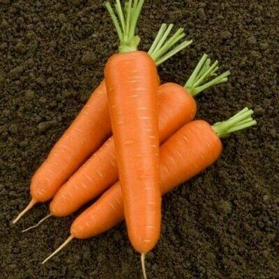 Морковь Олимпо F1