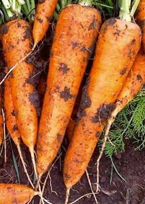 Морковь Диаменто F1