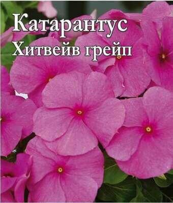 Катарантус Хитвейв грейп