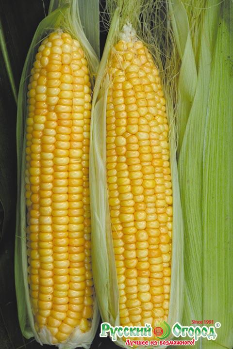 Кукуруза суперсахарная Сливочный нектар F1