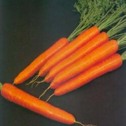 Морковь Свит Кэндл F1