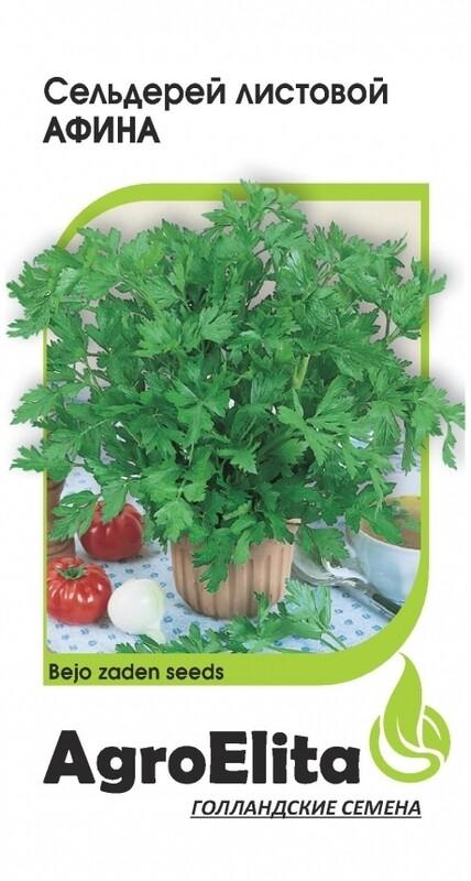 Сельдерей листовой Афина