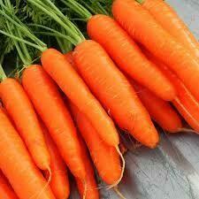 Морковь Сентябрина