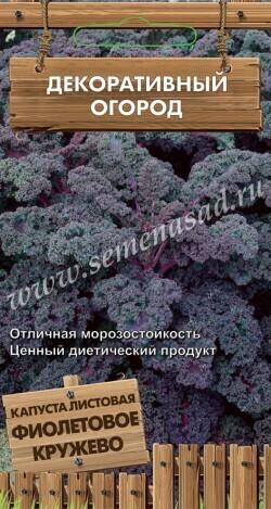 Капуста листовая (кейл) Фиолетовое кружево