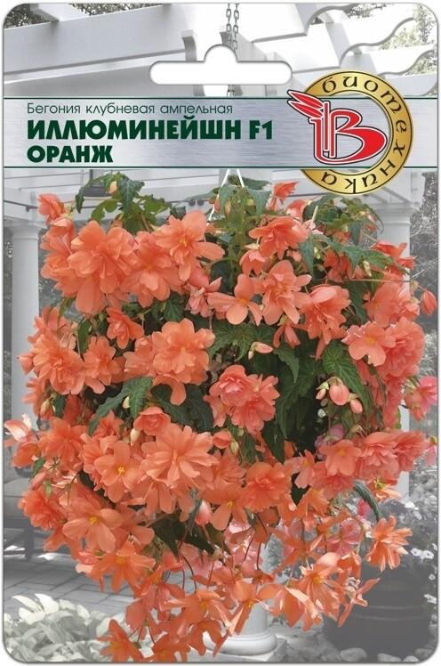 Бегония ампельная Иллюминейшн F1 Оранж