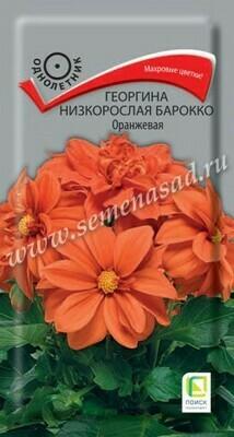 Георгина низкорослая Барокко оранжевая
