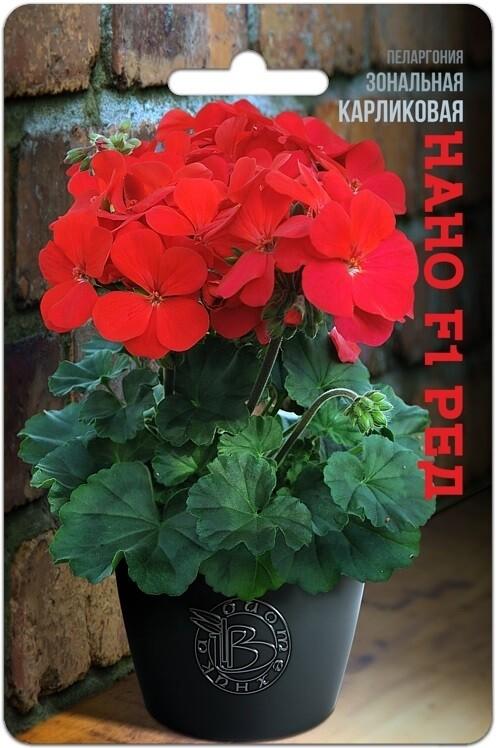 Пеларгония зональная карликовая Нано F1 Ред