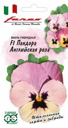 Виола гибридная Пандора Английская роза F1