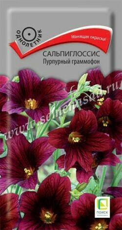 Сальпиглоссис Пурпурный граммофон