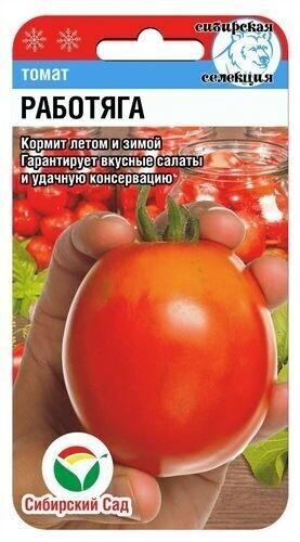 Томат Работяга