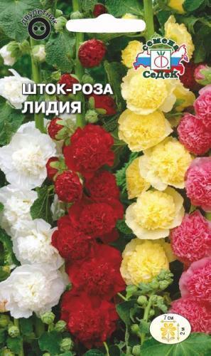 Шток-роза Лидия