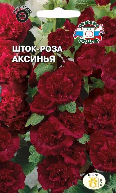 Шток-роза Аксинья