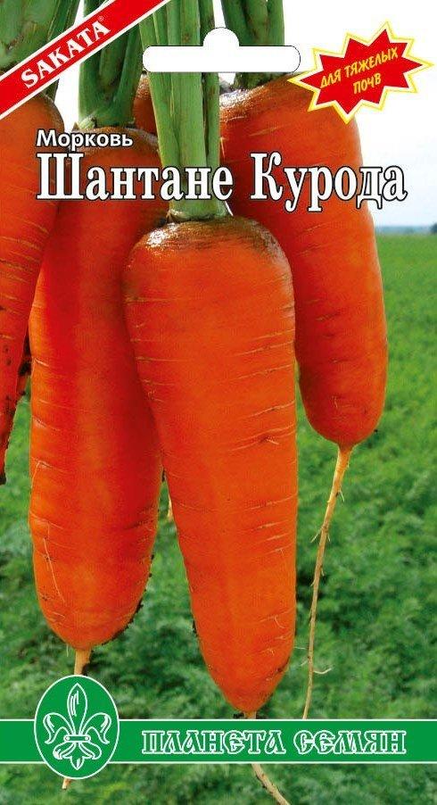 Морковь Шантане курода