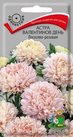 Астра Валентинов день Лососево-розовая