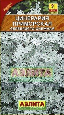Цинерария приморская серебристо-снежная
