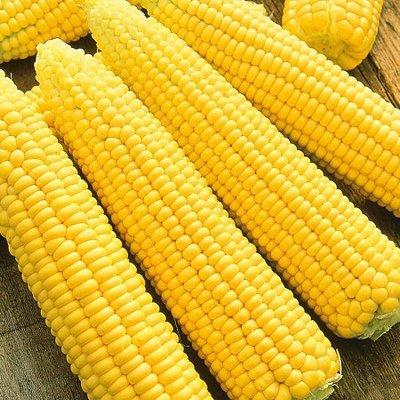 Кукуруза сахарная Яркий Жан