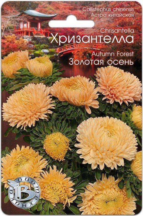 Хризантелла Золотая осень