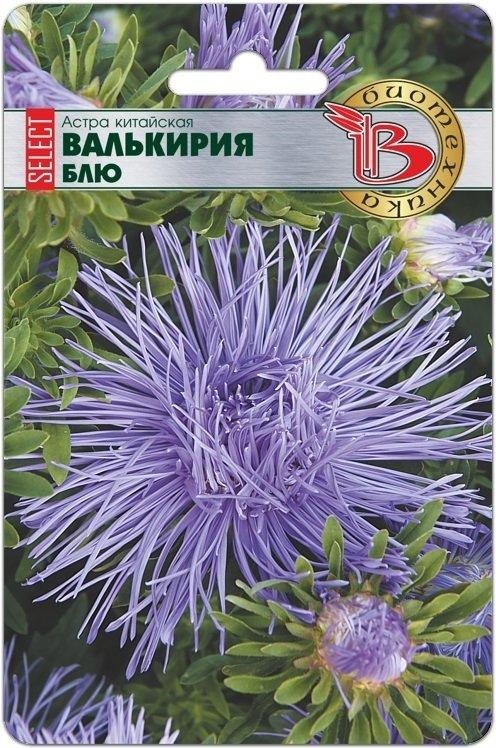"""Астра """"Валькирия"""" селект Блю"""