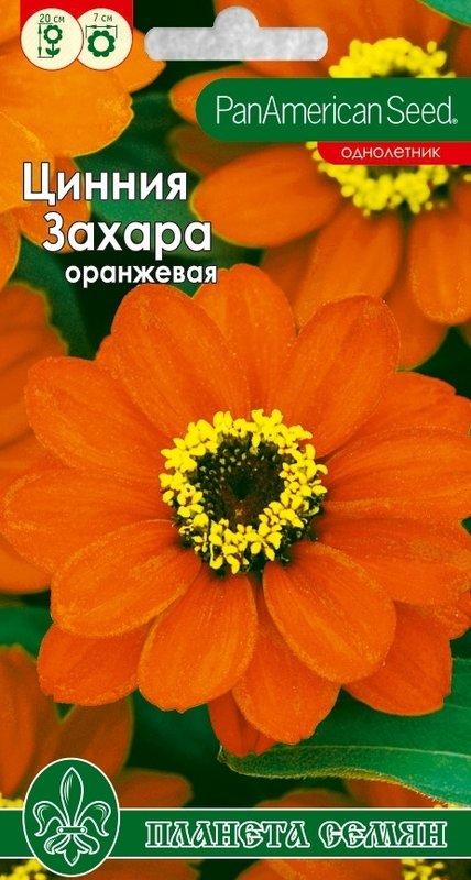 Цинния Захара оранжевая