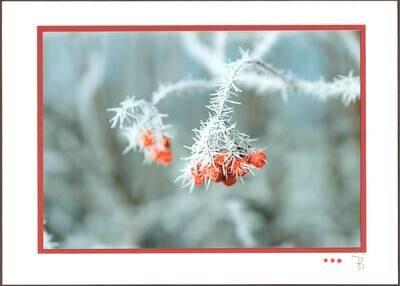Rote Beere Festliche Karten Glimmer C5