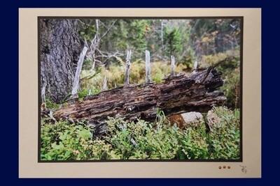 Fotokarte Trauer Baum C5