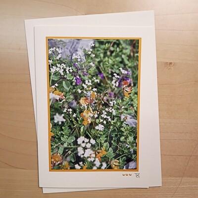 Fotokarte  Alpsummer Blumenpracht C5