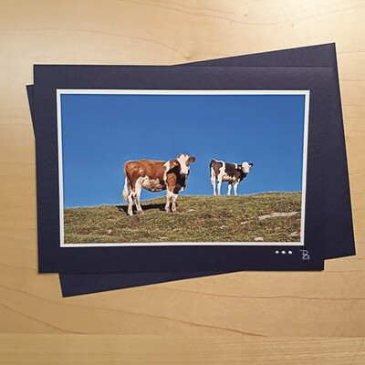Fotokarte  Alpsummer Rinder C5