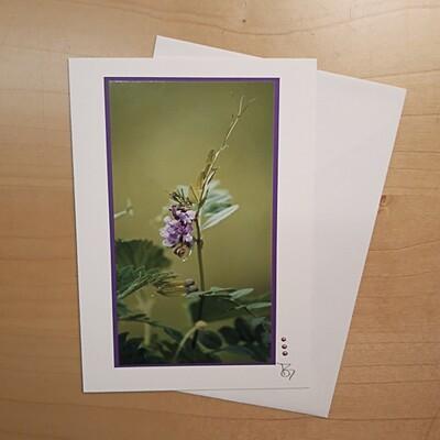 Fotokarte Alpsummer B6
