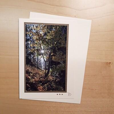 Fotokarte Trauer Baumlicht Herbst C6