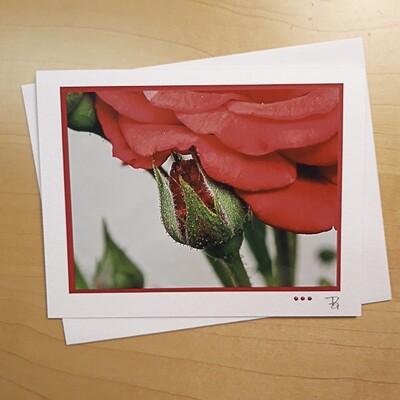Fotokarte Sommerzeit Rose