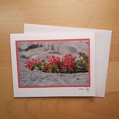 Fotokarte Alpsummer Steinrose