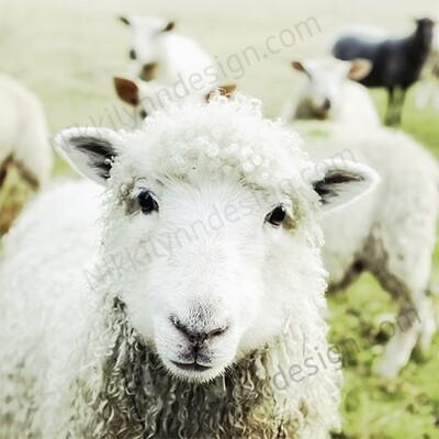 Farmhouse Rural Lamb Square Print Up To 16x16 Digital Download
