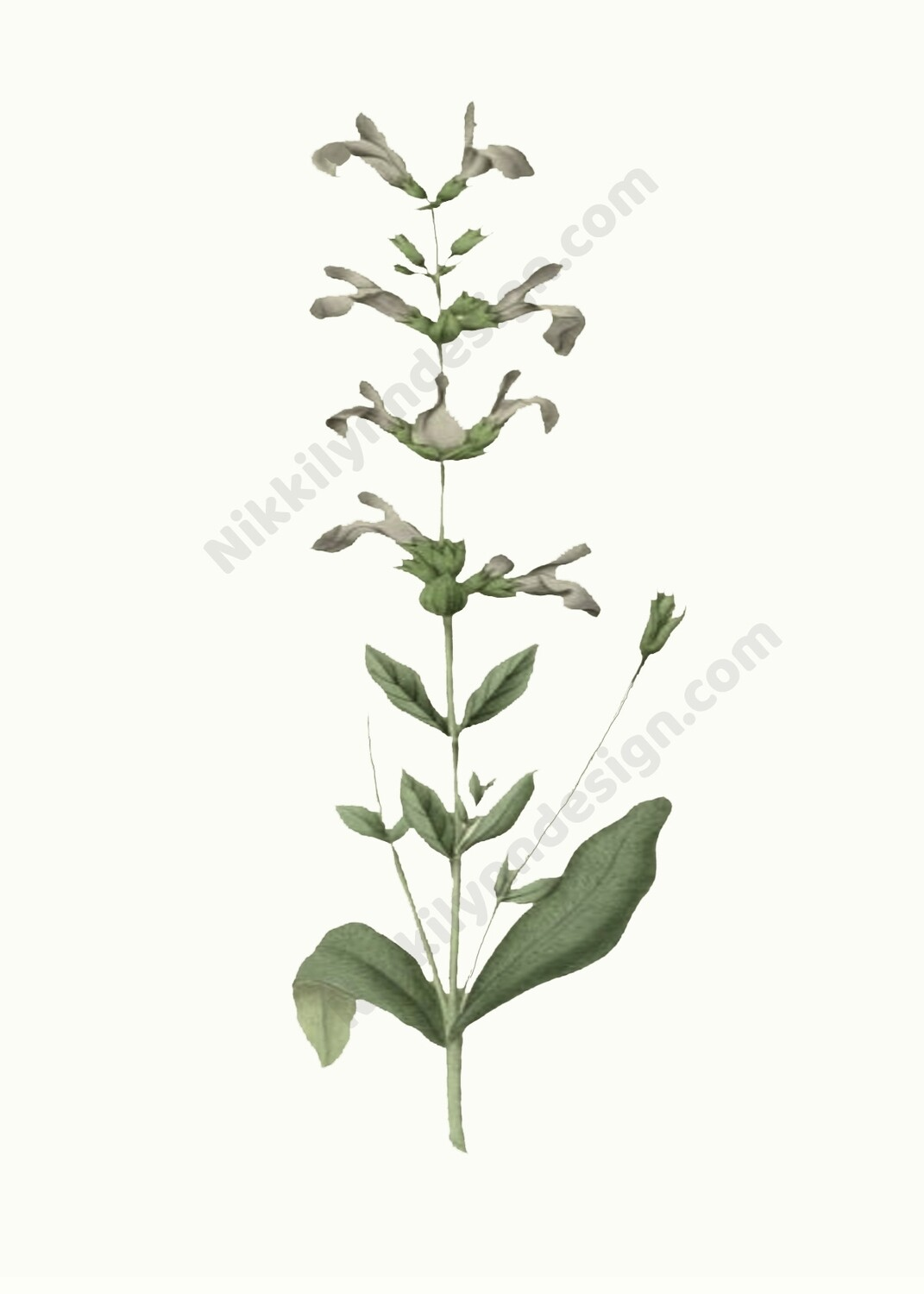 Common Sage Digital Download Prints Up To 8x10