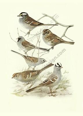 Sparrow Digital Download Prints Up To 8x10