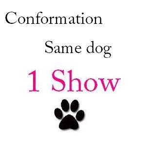 Conformation Same Dog 1 Show - $28 + $1 service fee