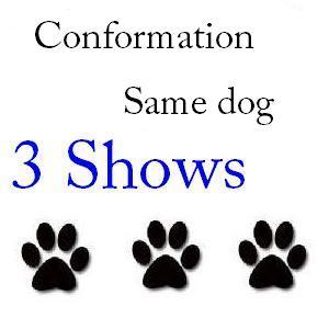 Conformation Same Dog 3 Shows - $84 + $1 service fee