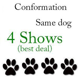 Conformation Same Dog 4 Shows - $112 + $1 service fee