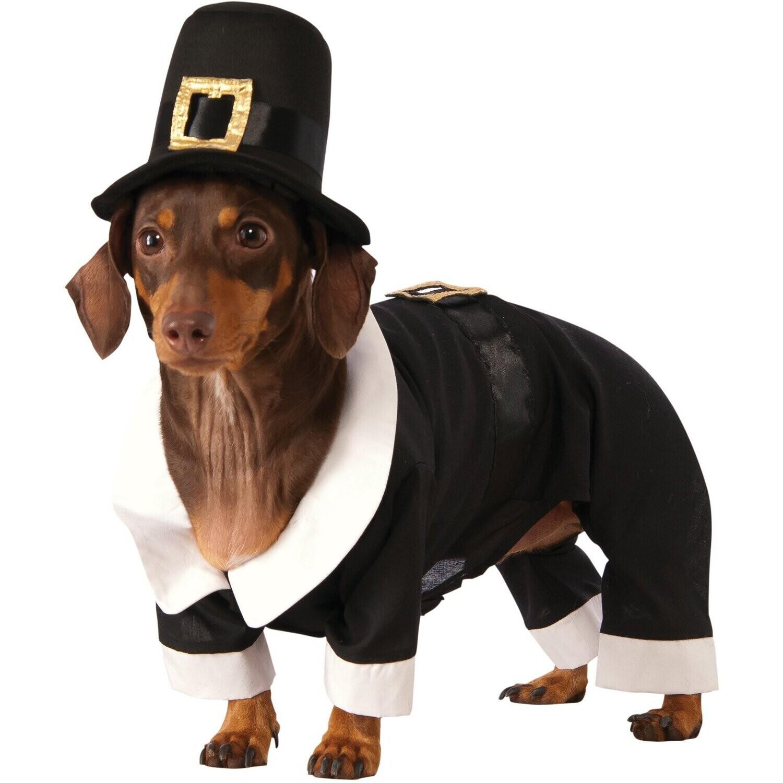 Pilgrim Boy Pet Costume