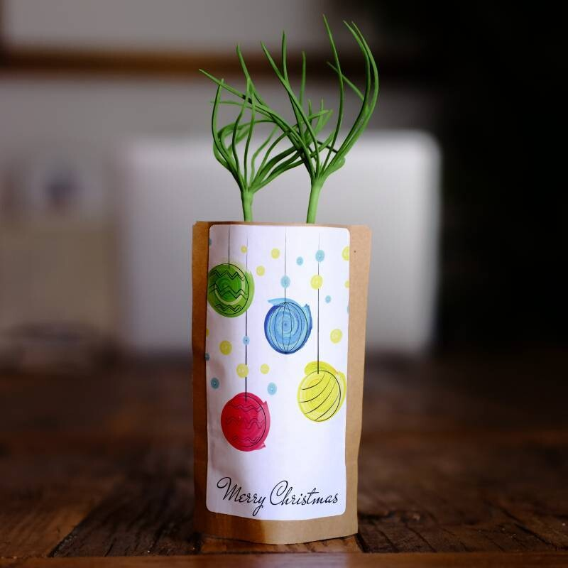 Merry Christmas Baubles Growing Kit
