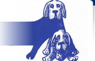 Hondenschoenen Enzo