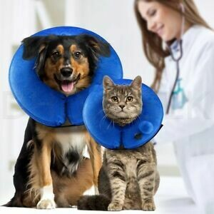 Specialty care for dogs & cats