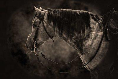 "SEPIA TONED RANCH HORSE PHOTO 16""x 20"""