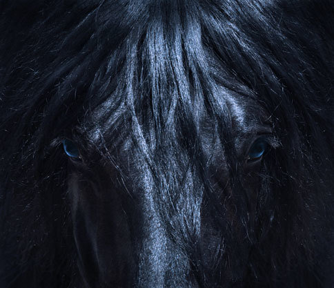 FRIESIAN BLUE 16