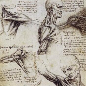 Анатомия онлайн. Школьный атлас