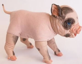 """15"""" Body for Standing (Awake) Piglets, Thistle & Fawn- USA - #8829"""