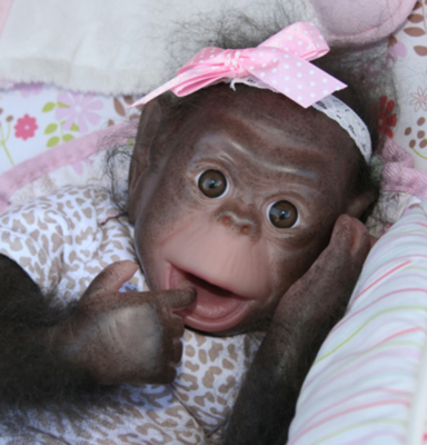"""Painted Rooted Cici Chimpanzee (17"""" Kit)"""